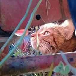 catsofpicsart cat catlove catlover