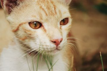 photography outdoors pet animal cat