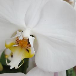freetoedit flower closeup clichebutsweet colorsplash