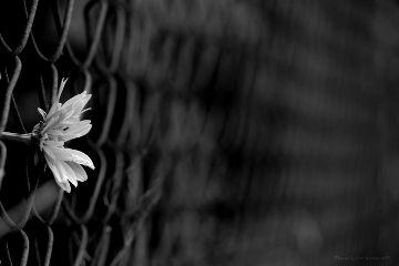 deeliriouss blackandwhite nature photography emotions