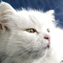 cat pet petsandanimals