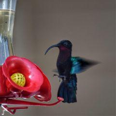 colorful nature photography petsandanimals bird