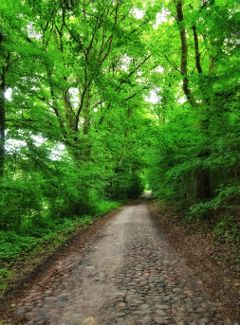 freetoedit road forest nature