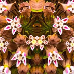 re previouspost petalsandblooms mirroredeffect upcloseandpersonal