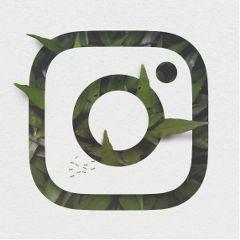 logo insta leaf crop editting