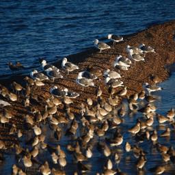 seabirds sanfranciscobay dawning naturephotography