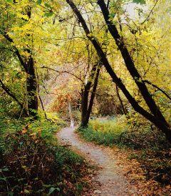 california interesting nature photography freetoedit