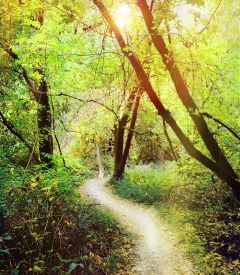 sunshine sun trail forest tree freetoedit