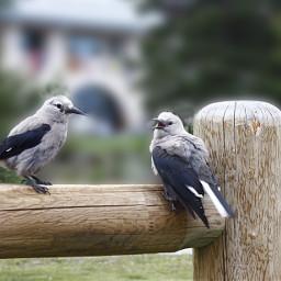 birds landscape banffnationalpark