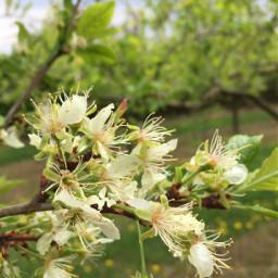 green summer flower mainz noedit