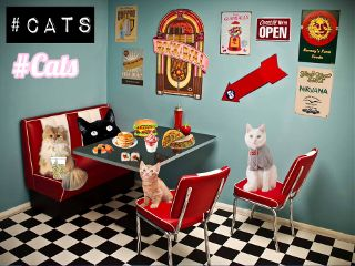 freetoedit diner cats food random