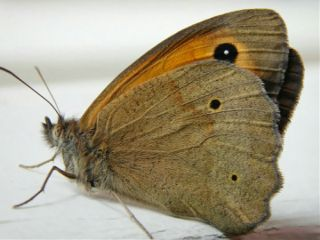 closetonature extremecloseup butterfly freetoedit