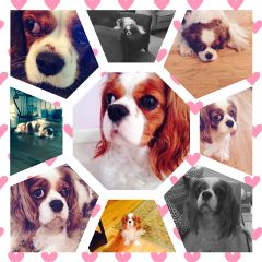 collage petcollage mypet mydog dogsofpicsart freetoedit
