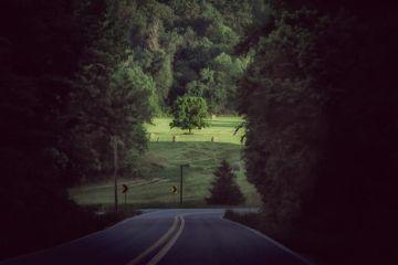 travel roadtrip summer arkansas tree
