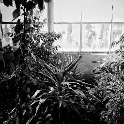 blackandwhite photography flowers windo