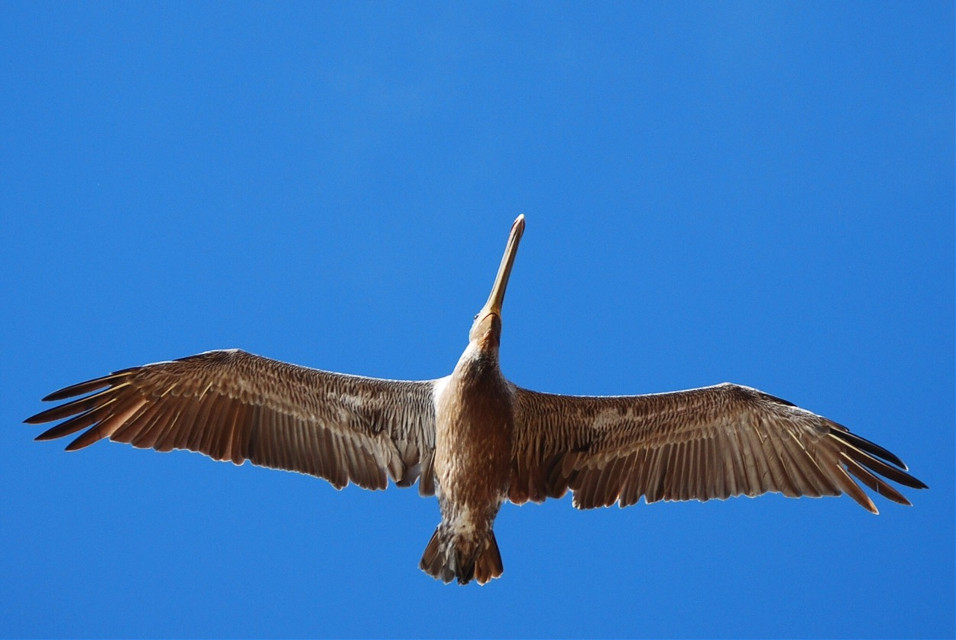 #FreeToEdit #photography #lookup #bird #fly #sky
