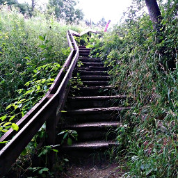 freetoedit stairs nature trees photography