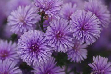 repeating purple macro closeup flower
