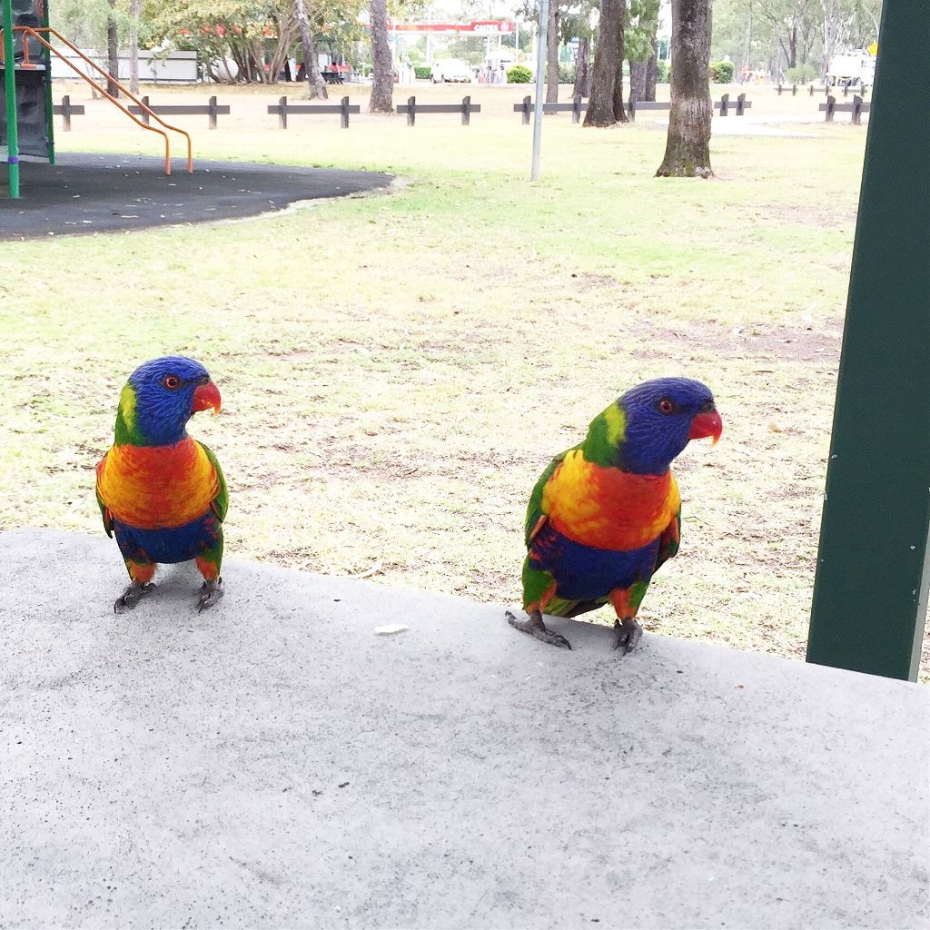 #nature #freetoedit #bird #parrot #naturephoto