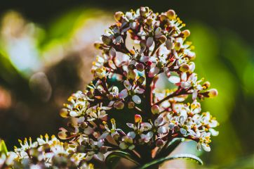 photography nature close outside