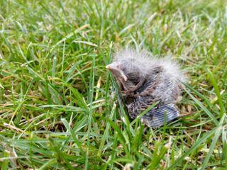 babybird rescue rescuebird nature happyend