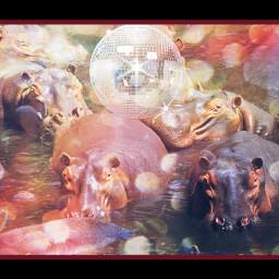 freetoedit dancinghippos disco