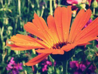 flower orange dodgereffect nature aftertherain