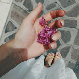 freetoedit flowers pink white innocence