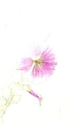 pencil monochrome art photography popart