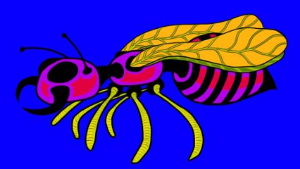 drawing popart colorful insect freetoedit