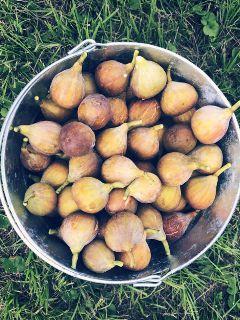 fig fruits yummy vegan foodie freetoedit