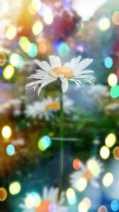 freetoedit. flower flowers garden light freetoedit