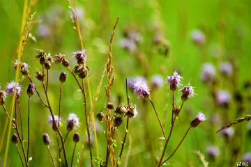 purple meadowflowers background green nature freetoedit