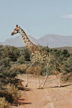 freetoedit remixit giraffe sparkling picsart