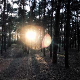 poland travel lensflare forest sun freetoedit