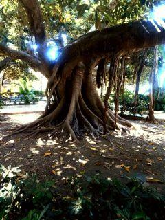 freetoedit tree picsart