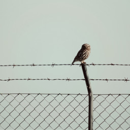 nature owl wirenetting barbedwirefence industrialmetal