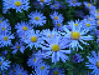 pixelate nature flower photography summer wappixelize