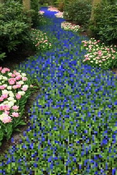 pixelate colorful garden flower nature