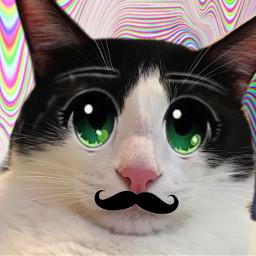 freetoedit cartooneyes catsart catsofpicsart cats