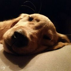 freetoedit unedited dog puppy cute