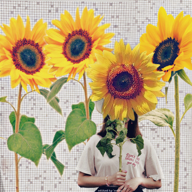 #myedit #editbyme #madewithpicsart #sunflowerremix
