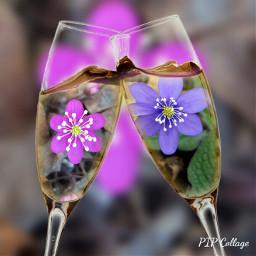 flowershot winelovers