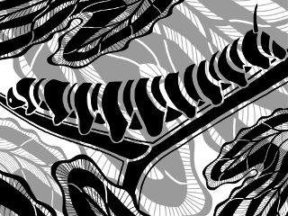 drawing garden insect blackandwhite nature freetoedit