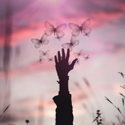 creative madewithpicsart sillhouette butterfly fantasy