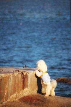 pets dog sea nature summer freetoedit
