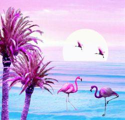 freetoedit flamingo hue sunset
