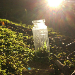 green nature jar moss