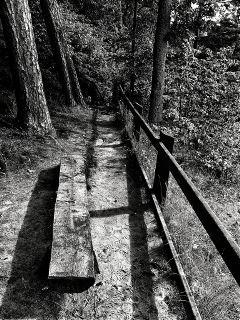 freetoedit forest blackandwhite
