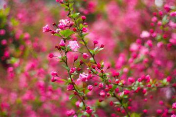freetoedit flowers myphoto